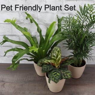 Pet Friendly Plant Set