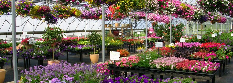 Inside the Garden Mart
