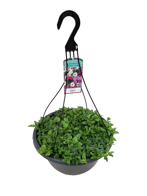 """16"""" MYSTERY Mixed Hanging Basket"""