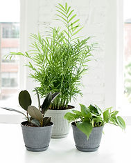 A group of houseplant in rustic styled pots