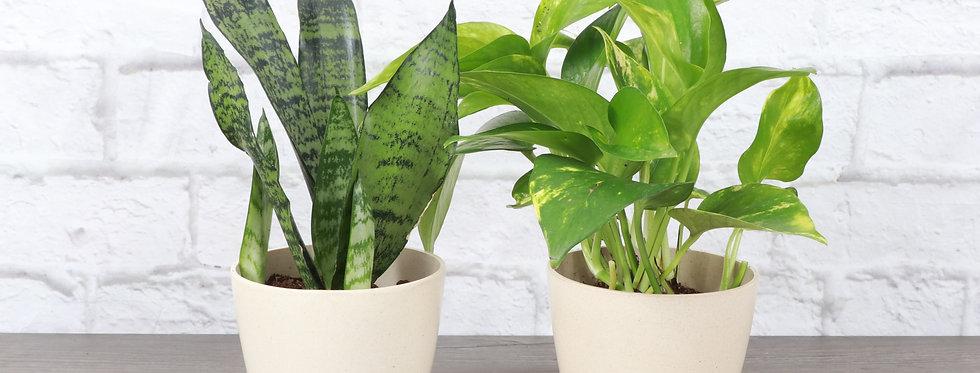 Houseplant Starter Bundle