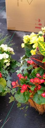Shade Combnation with Croton