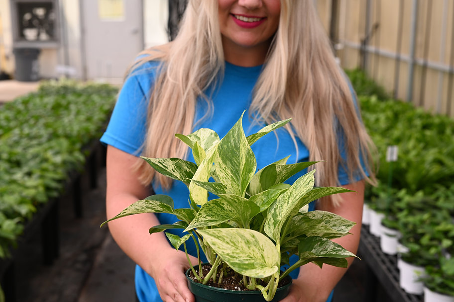 Woman holding out a plant and smiling