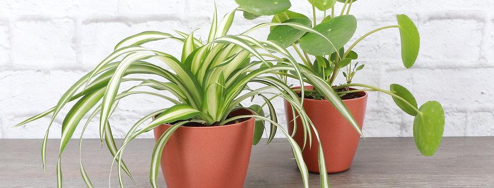 Best Friends Plant Bundle