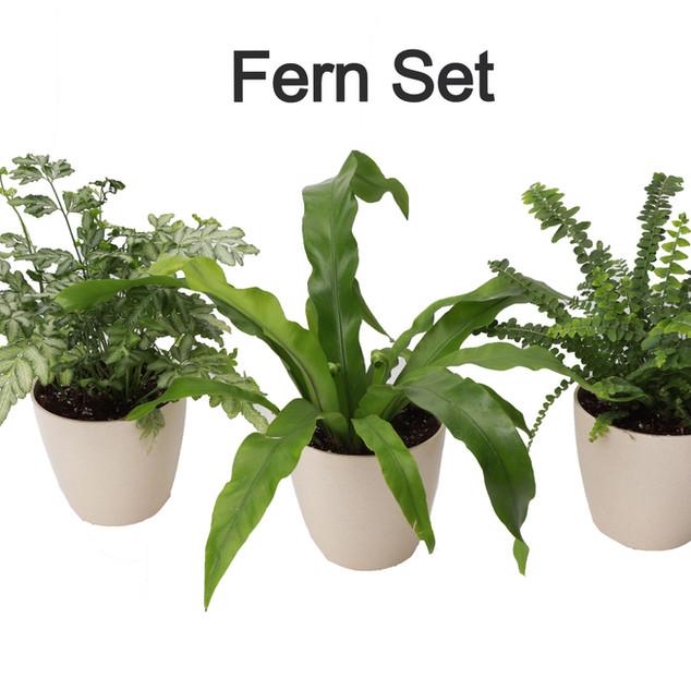 Fern Set