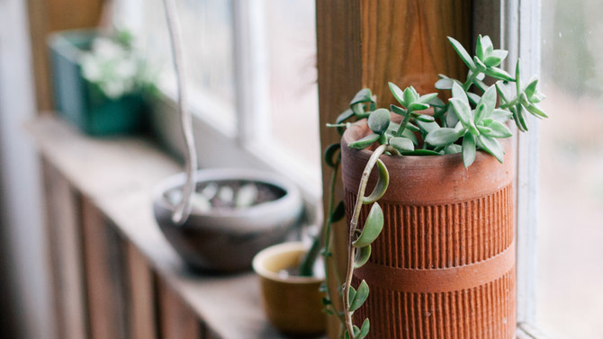 6 Simple Tricks to Liven Up Your Windowsill Garden