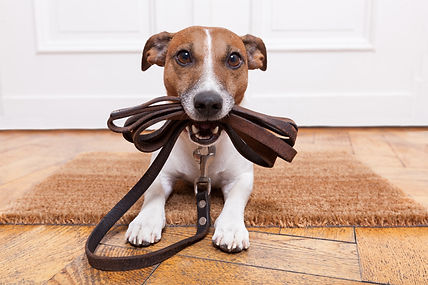 dog with leather leash waiting to go wal