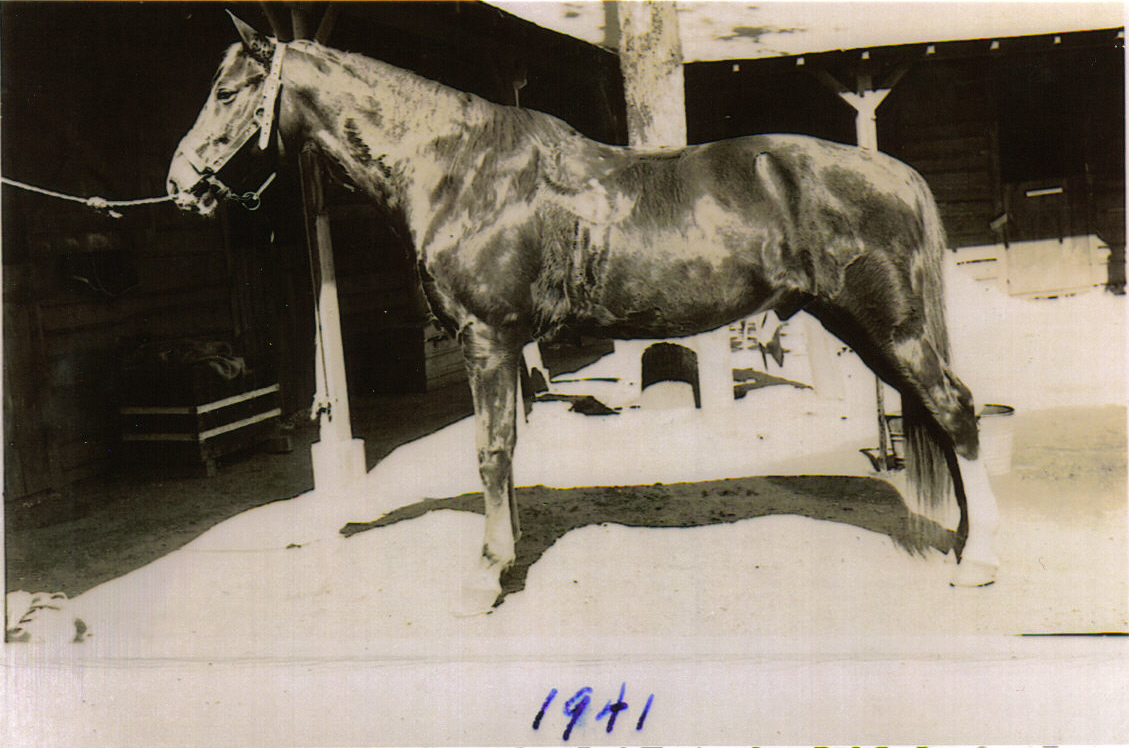 Boarded horse 1941