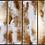 Thumbnail: Set de 4 cuadros decorativos CA221