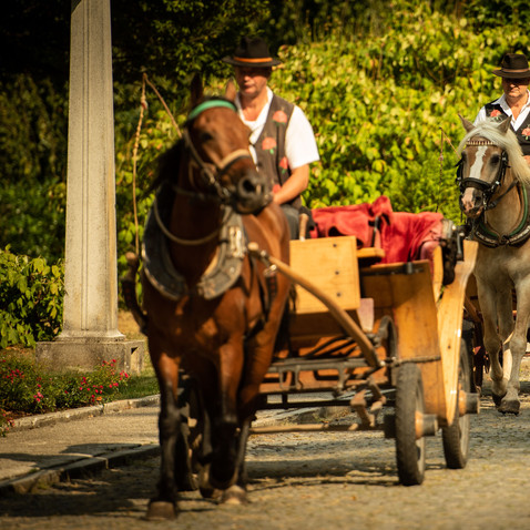 Slovenia wedding horse carriages