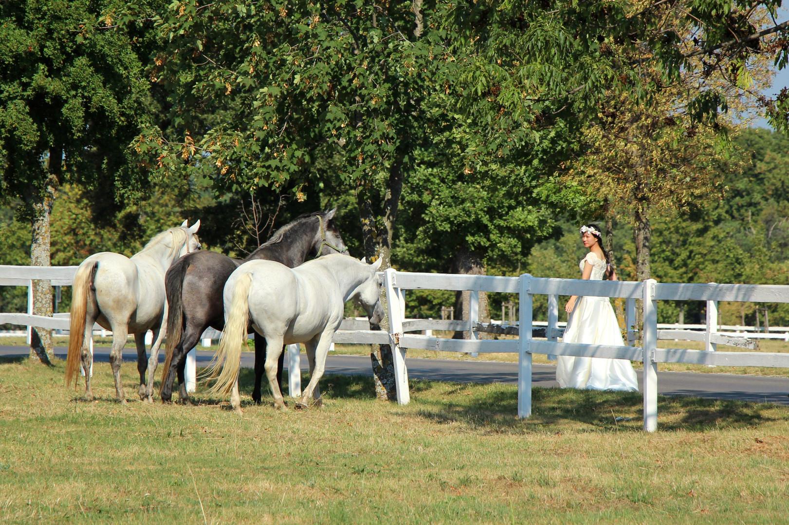 Lipica white horses KUMA HOME Slovenia