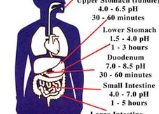 FOCO: pH do corpo