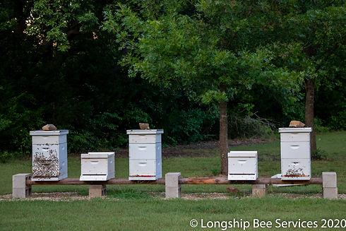 leasing bees.jpg