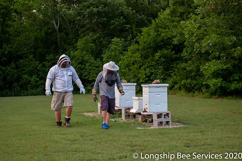 longship bee services.jpg