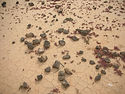 Lobos_Island_desertification.jpg
