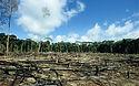 Deforestation_2074483b.jpg