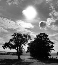 Trees+3+72dpi.jpg