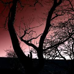 Red+Winter.jpg