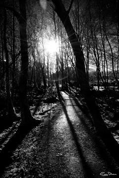 Sun Through branches.jpg