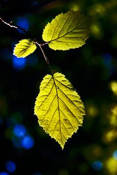 Sun+Leaf.jpg