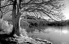 tree and water 2.jpg