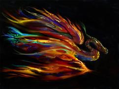 firebird+email.jpg
