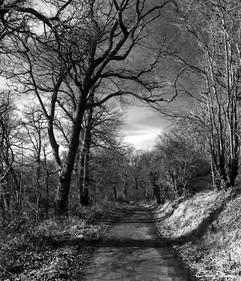 Woodroad Walk.jpg