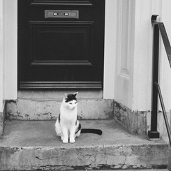 Amsterdam Cat