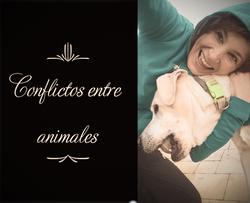 conflictos_edited