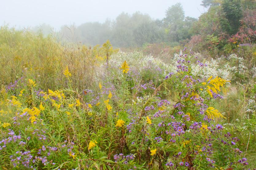 Monarch Meadow