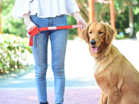 Ley de Protección Animal y Tenencia Responsable No. 248-12. G. O. No. 10692 del 15 de agosto de 2018