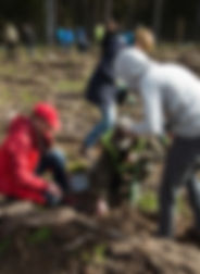 Tree Planting In Poland CAL