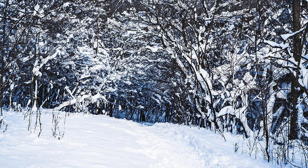 Start winter image.jpg