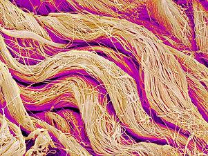 collagen-fibres-sem-susumu-nishinaga.jpg