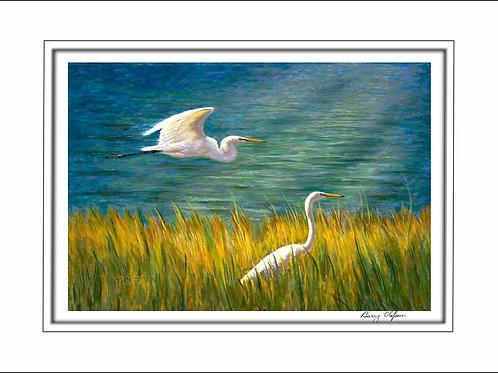 FA00137 Egrets