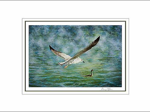 FA00064 Juvenile Gull and Anhinga