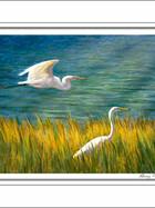FA00137-Two-Egrets-5-X-7.jpg