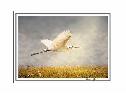 00250 Egret
