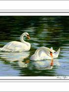 FA00068-Swans-5-X-7.jpg