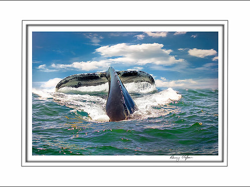 00761 Whale Watching