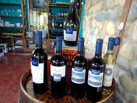 Azul Vineyard, Uco Valley
