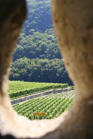 Wine Region Around Lake Geneva