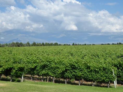 Vineyards of Alta Vista, Chacras de Coria