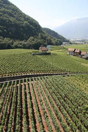 Chateau de Aige Vineyards