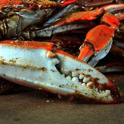 big-crab-claw-bill-swartwout.jpg
