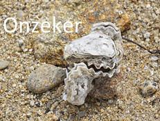 Exhibitionistisch oester