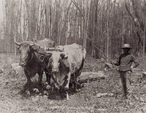 Joseph Snyder and Bulls
