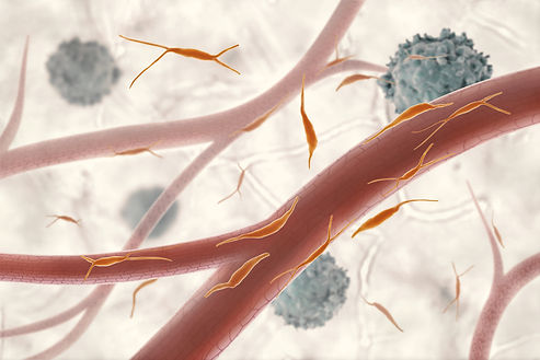 Endoterial+Fribroblast+cancer.jpg