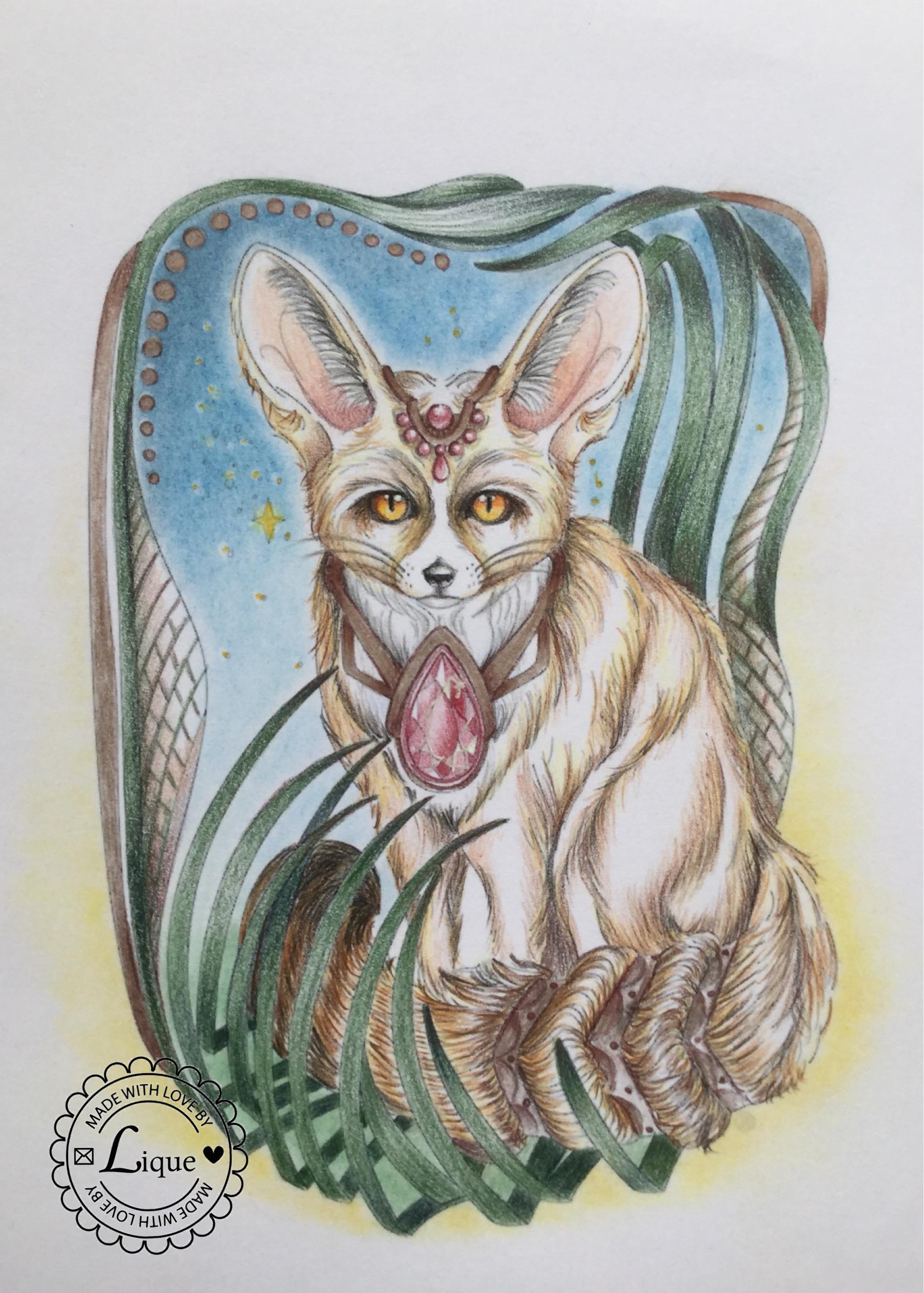 Fennec fox by night