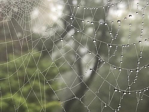 Rosemary Woodel: Spider Artist